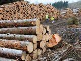 Peste 100 de acţiuni organizate de poliţiştii maramureşeni pentru protejarea fondului forestier