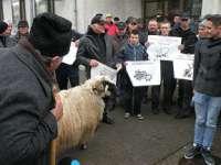 Peste 100 de oieri din Maramureş, nemulțumiți de Legea vânătorii, protestează la Bucureşti