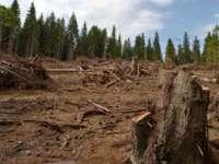 """Peste 1.000 de hectare de pădure din Maramureş au fost """"rase"""" în patru ani"""