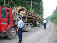 Peste 200 mc lemn confiscat ieri de poliţiştii din Vişeu de Sus