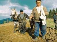 Peste 40.000 de fermieri din Maramureş aşteptaţi până în 15 mai la APIA