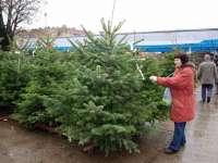 Peste 50 de sancţiuni aplicate şi 81 de pomi de Crăciun confiscaţi de Poliţiştii Serviciului de Ordine Publică
