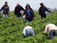 Peste 50% dintre românii plecaţi la muncă în străinătate se gândesc să revină definitiv în țară
