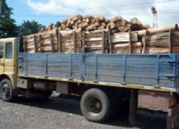 PETROVA: Barbat prins în timp ce transporta material lemnos fără documente legale
