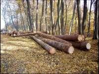 PETROVA -  Mai mulți bărbaţi sunt cercetaţi de poliţişti pentru tăiere ilegală şi furt de arbori