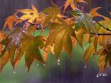 Ploi și răcire accentuată a vremii în aproape toată țara, până vineri seară. Cod galben de ploi în Maramureş de joi seara