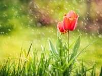 Ploi şi temperaturi scăzute de Paşte. PROGNOZA METEO pe trei luni