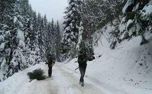 Poienile de Sub Munte: Unsprezece metri cubi lemn de esenţă răşinoase confiscaţi de poliţişti