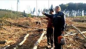 POLIŢIA: 8.933 mc materiale lemnoase, tăiate ilegal, confiscate anul trecut în Maramureş