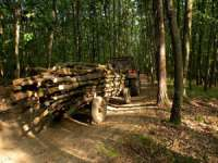 POLIŢIA: Material lemnos confiscat la Giuleşti