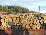 POLIȚIA: Borşan amendat pentru transport ilegal de material lemnos