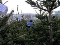 """Poliţiştii împreună cu personalul silvic desfăşoară acţiunea ,,Pomi de Crăciun"""""""