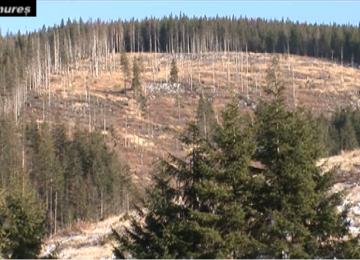 Prefectura Maramureș pierde un nou proces în scandalul celor 17.000 de hectare de la Borșa