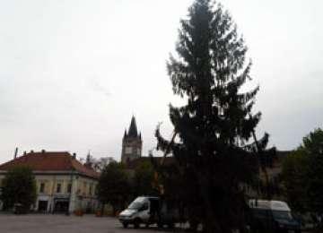 Pregătiri pentru sărbatorile de iarnă - Bradul de Crăciun a ajuns în Centrul Vechi din Baia Mare