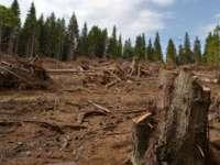 PREJUDICIU DE 52 MILIOANE DE EURO – 80% din tăierile ilegale de păduri din România sunt în județele Maramureș, Cluj și Alba