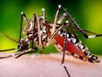 Primul caz de transmitere de la femeie la bărbat a virusului ZIKA, semnalat la New York