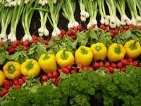 Producatorii maramureseni, revoltati de propunerea UE de a interzice semintele traditionale