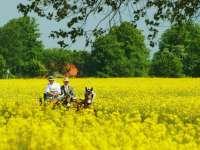 Producțiile de grâu, porumb, rapiță și floarea soarelui sunt mult mai mici față de 2014