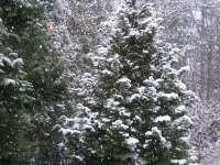 Prognoza meteo până pe 14 decembrie. Aflaţi cum va fi vremea în Maramureş