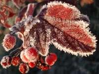 PROGNOZA METEO pe două săptămâni în MARAMUREŞ: Temperaturile scad, apar bruma şi ceaţa