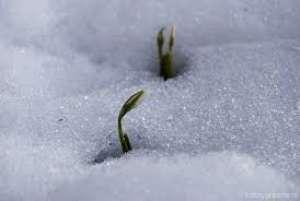 PROGNOZA METEO pe două săptămâni: Vreme caldă în Maramureş, la sfârsit de februarie