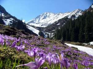 PROGNOZA METEO PE TREI LUNI: Cum va fi vremea în primăvara acestui an