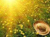 PROGNOZA METEO PE TREI LUNI: Început de vară ploios, cu temperaturi sub mediile multianuale ale perioadei
