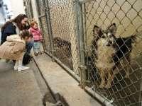PROIECT – Cei care adoptă animale din adăposturi vor primi medicamente și hrană la prețuri reduse