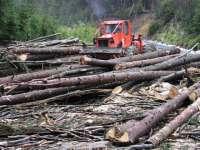 Proiect de lege: Masinile folosite la furtul de lemne din păduri vor fi confiscate