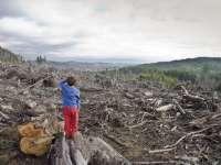 REPUBLICA BORȘA – Corpul de control al MAI, controale în Maramureş în scandalul celor 17.000 hectare de pădure retrocedate pe acte false
