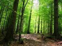 Ritmul global de dispariție a pădurilor a încetinit în ultimii 25 de ani