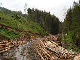 România are o nouă aplicație dedicată sectorului forestier