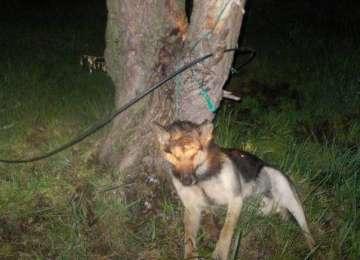 România, din nou condamnată de Europa: Cruzimea față de animale