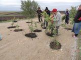 Salcâmi plantați în gropile de pe un drum județean, în semn de protest față de starea proastă a acestuia
