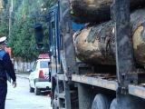 Sancţiuni contravenţionale şi confiscare de material lemnos