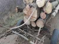 Săpânța: Bărbat condamnat pentru infracțiuni silvice