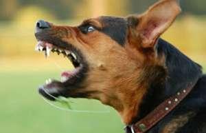 Satu Mare: Fetiţa de 3 ani, desfigurată de câinele unor vecini