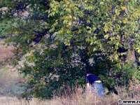 SATU MARE: Împuşcat la furat de nuci