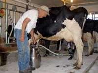 Scăderea TVA pentru lapte se va face după ce producătorii și fermierii vor ajunge la un consens