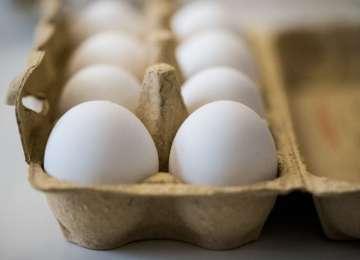 Scandalul ouălor toxice a ajuns în România. Cât de periculos este fipronilul