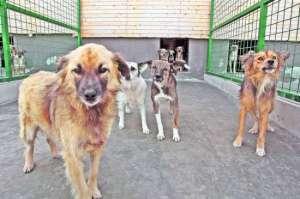 Scrisoare de mulțumire adresată Autorității locale din Sighet de către organizatorii campaniei de sterilizare a câinilor fără stăpân