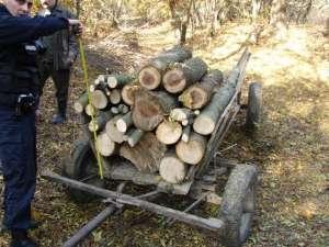 """""""Scutul Pădurii"""": Poliţiştii au confiscat ieri 18 mc material lemnos transportaţi ilegal în Ieud şi Leordina"""