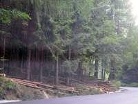 Se taie copacii pentru lărgirea Pasului Gutâi