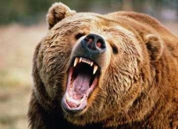 Sfaturile folositoare ale jandarmilor montani, pentru a evita atacurile urşilor