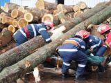 SIGHET: ACCIDENT DE MUNCA – Un muncitor a murit după ce o aşchie i-a secţionat artera femurală