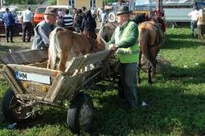 SIGHET - Amenzi de 9.000 de lei aplicate de către Poliţiştii sigheteni în Târgul lunar organizat în municipiu