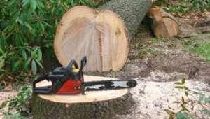 SIGHET: Bărbat din Strâmtura cercetat pentru tăiere ilegală şi furt de arbori