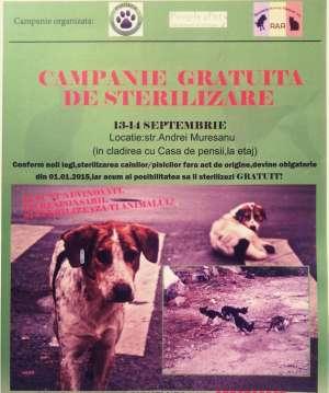 Sighet - CAMPANIE DE STERILIZARE GRATUITĂ a câinilor și pisicilor, derulată în acest weekend