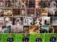 SIGHET - Campanie gratuită de sterilizare a câinilor și pisicilor