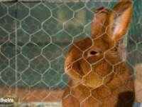 SIGHET - Expoziția cu vânzare de păsări și animale mici continuă și în această sâmbătă